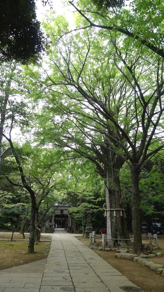 画像 氷川神社の境内の様子